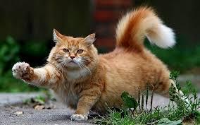 Мышы – для слабакоў: кот палюе на мядзведзяў – дзіўнае відэа