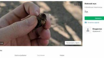Беларусы пачалі гандляваць хрушчамі